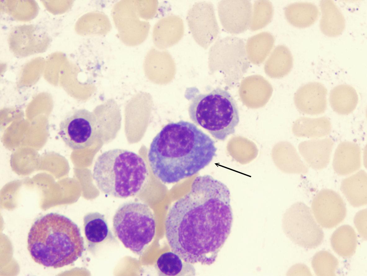 David Haken's Immunology Page